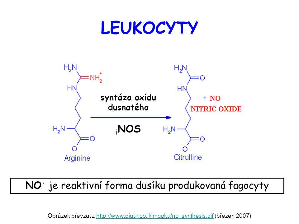 syntáza oxidu dusnatého