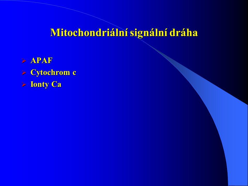 Mitochondriální signální dráha