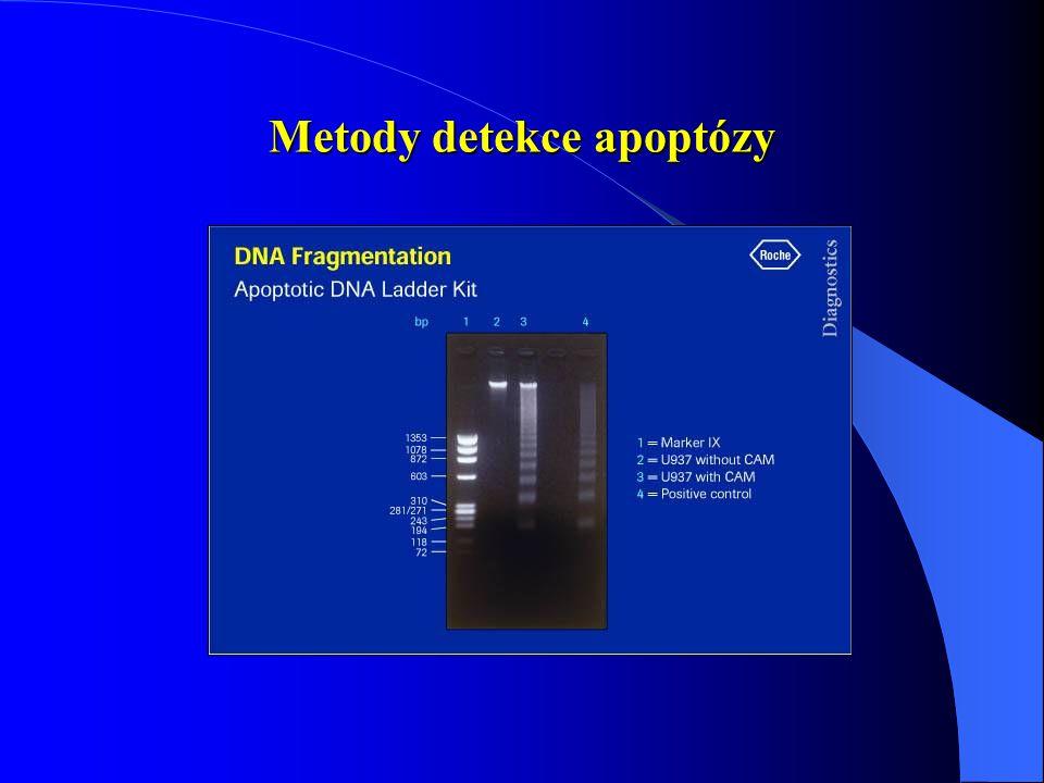 Metody detekce apoptózy