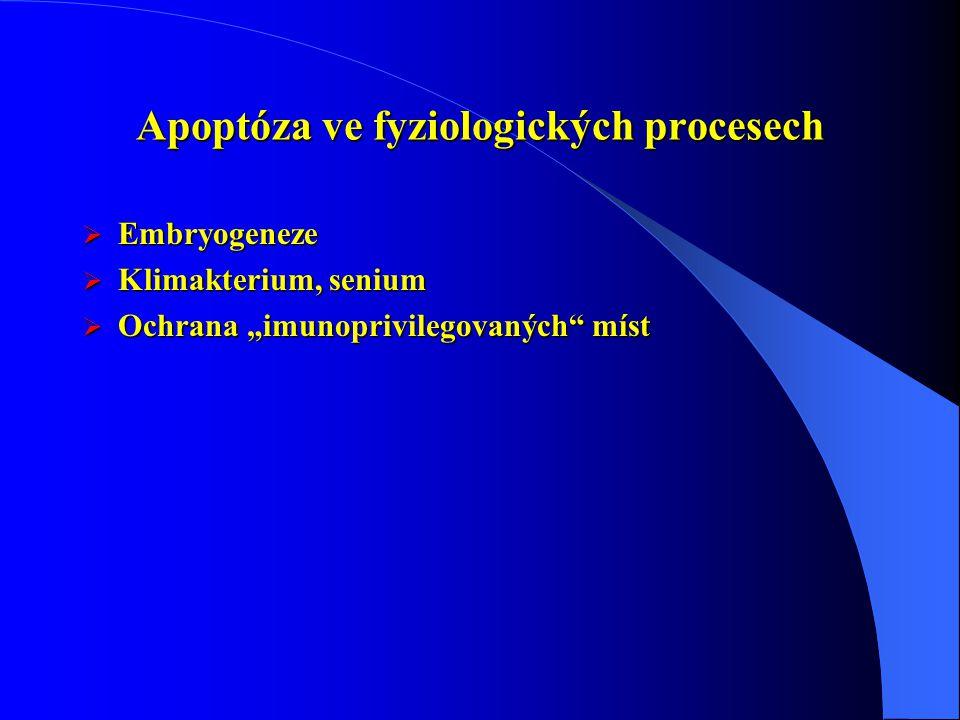 Apoptóza ve fyziologických procesech