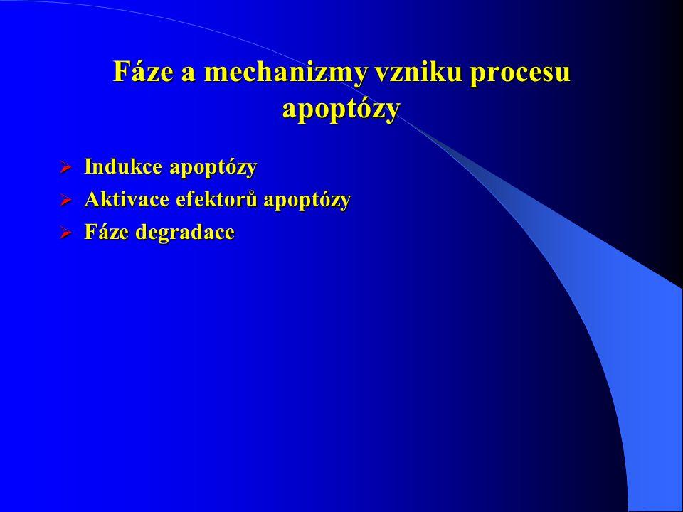 Fáze a mechanizmy vzniku procesu apoptózy