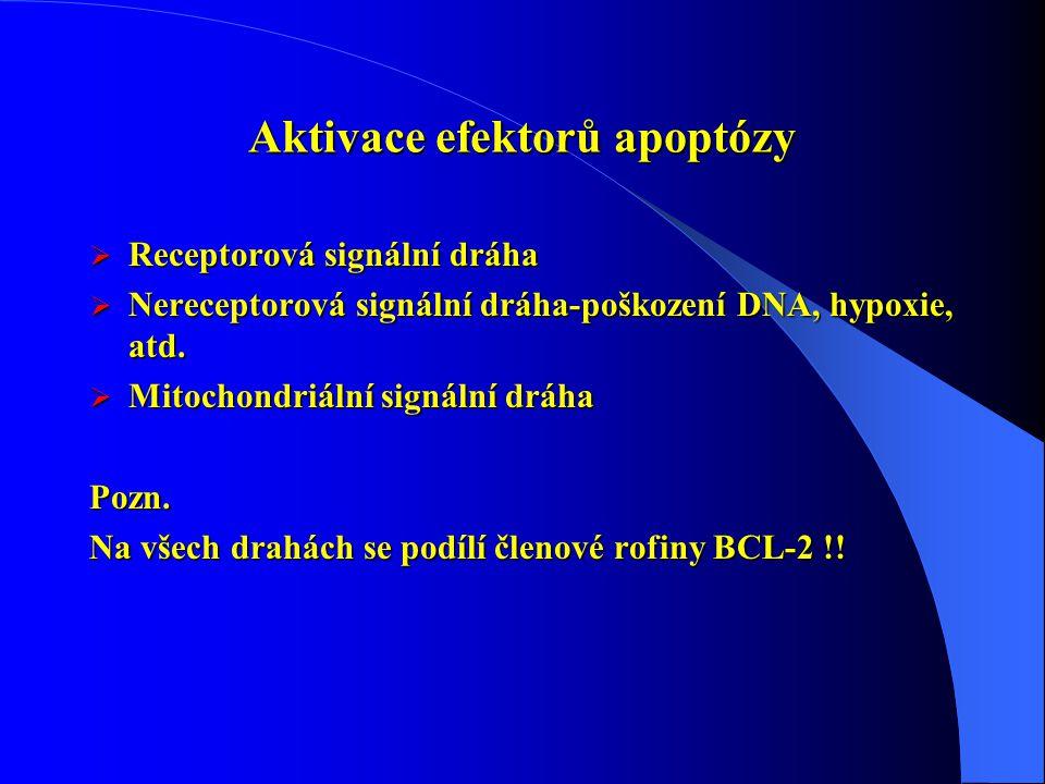 Aktivace efektorů apoptózy