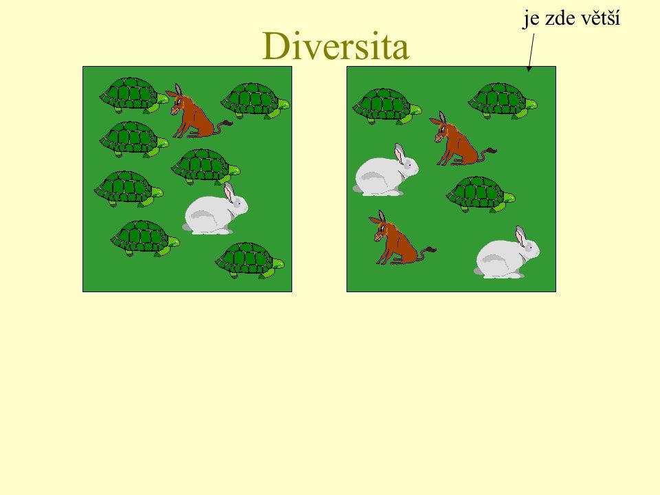 je zde větší Diversita