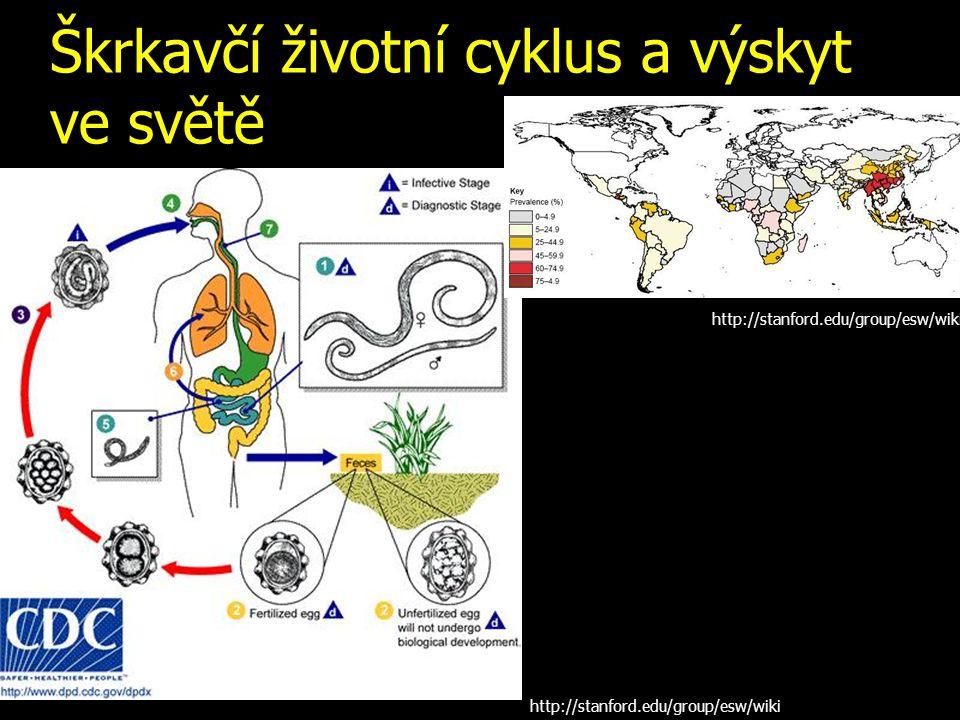 Škrkavčí životní cyklus a výskyt ve světě