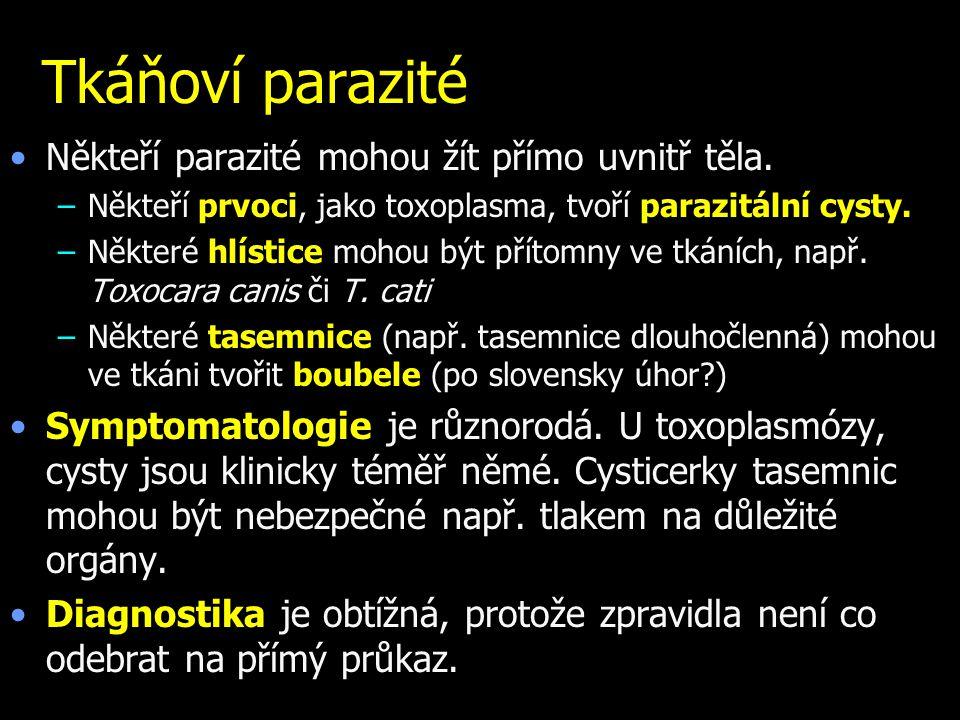 Tkáňoví parazité Někteří parazité mohou žít přímo uvnitř těla.