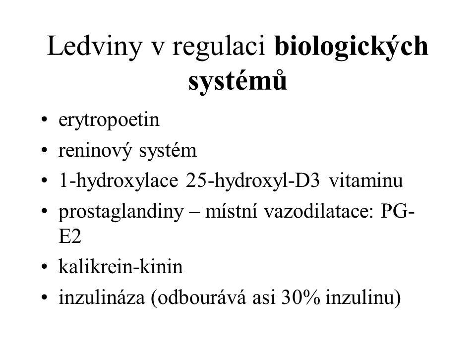 Ledviny v regulaci biologických systémů
