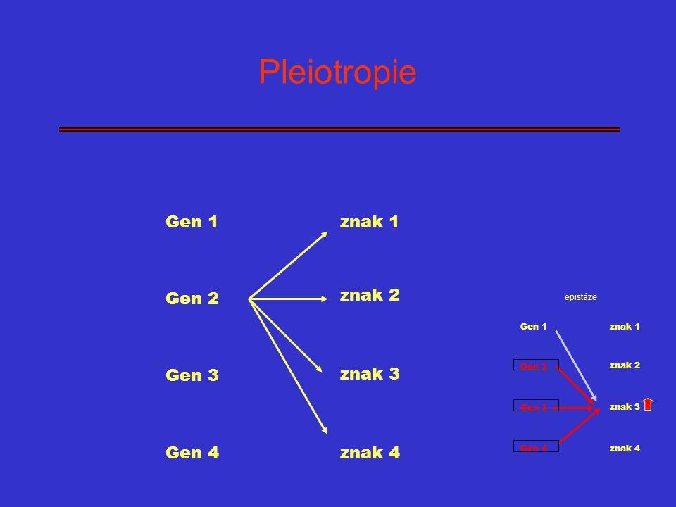 Pleiotropie Gen 1 znak 1 Gen 2 znak 2 Gen 3 znak 3 Gen 4 znak 4