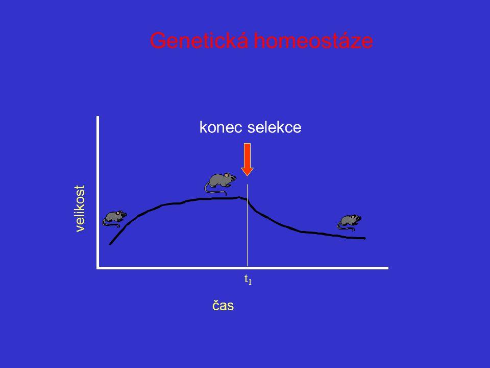 Genetická homeostáze konec selekce velikost čas t1