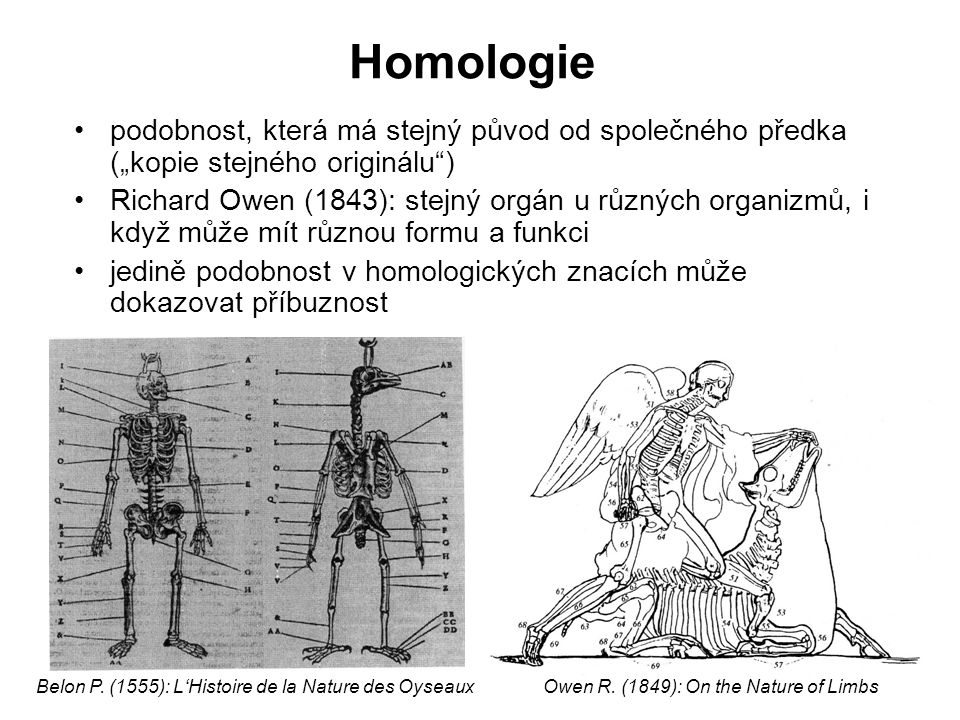 """Homologie podobnost, která má stejný původ od společného předka (""""kopie stejného originálu )"""