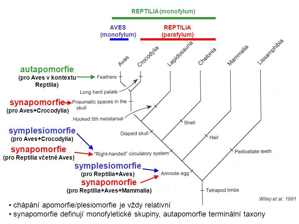 autapomorfie synapomorfie symplesiomorfie synapomorfie symplesiomorfie