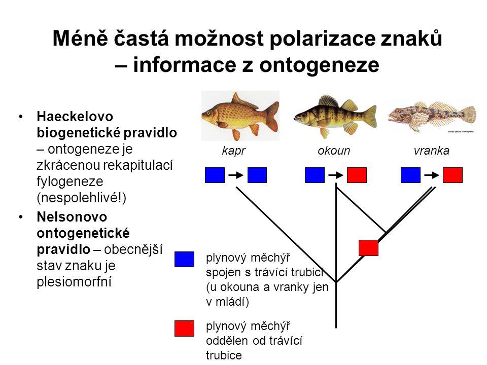 Méně častá možnost polarizace znaků – informace z ontogeneze