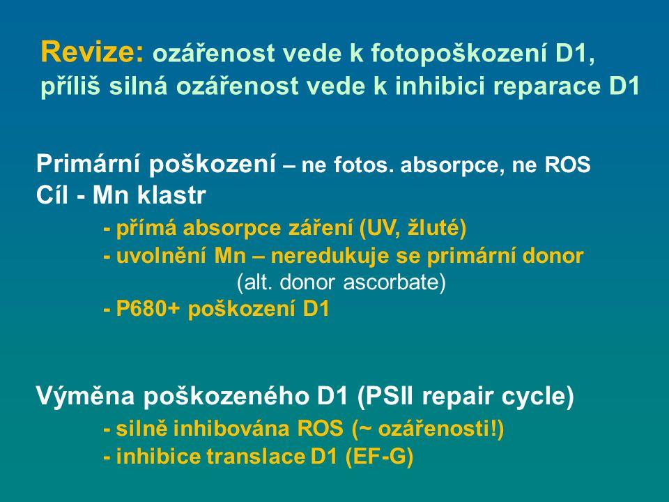 Revize: ozářenost vede k fotopoškození D1,