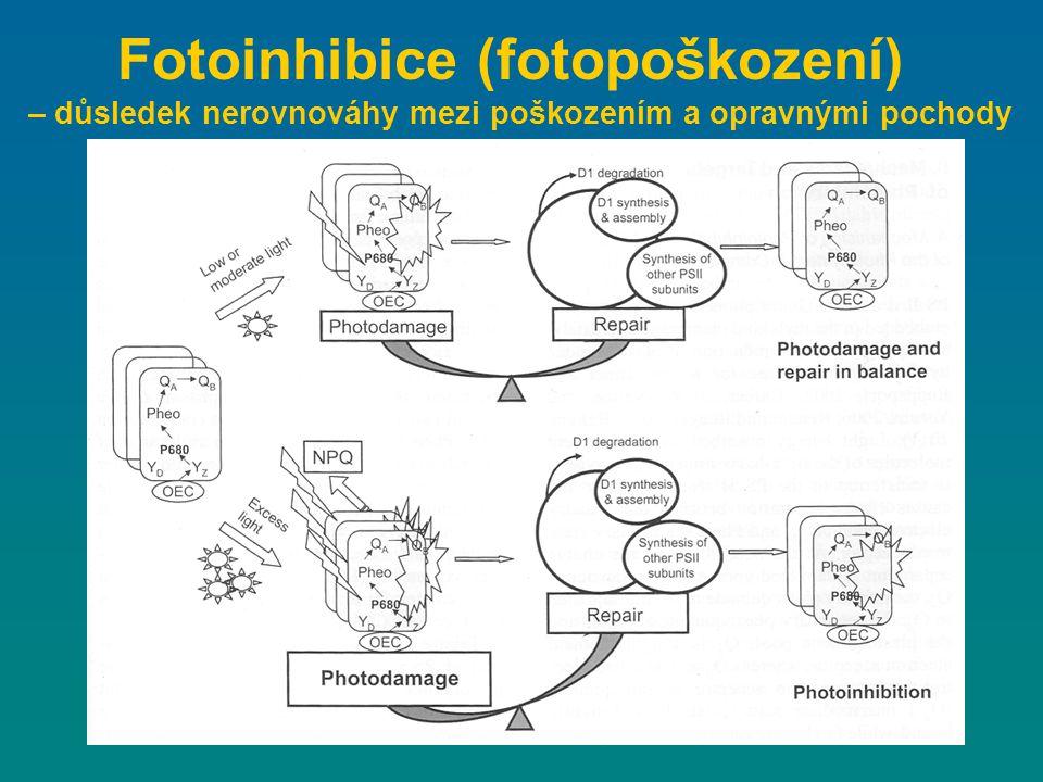 Fotoinhibice (fotopoškození)