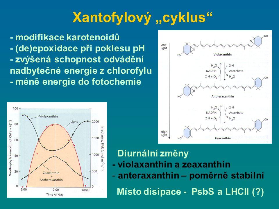 """Xantofylový """"cyklus - modifikace karotenoidů"""