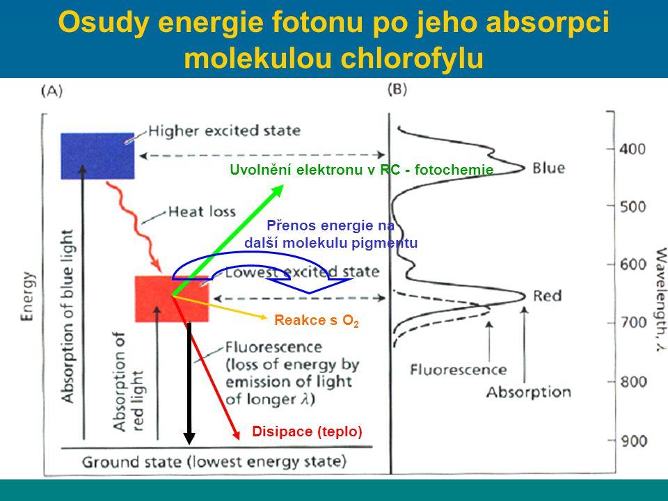 Osudy energie fotonu po jeho absorpci molekulou chlorofylu