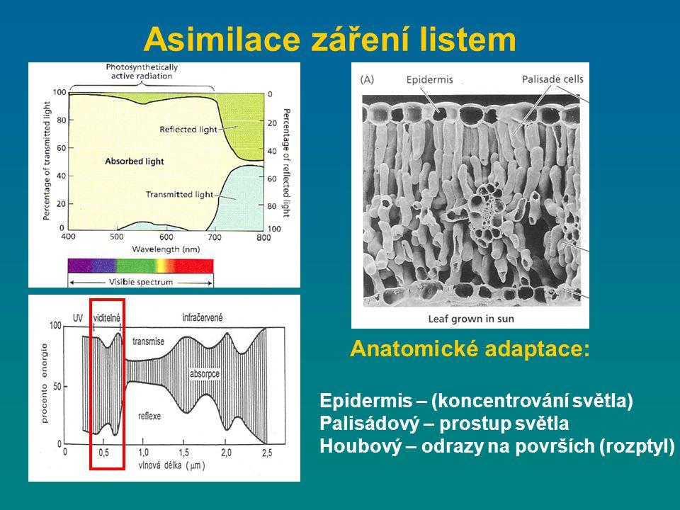 Asimilace záření listem