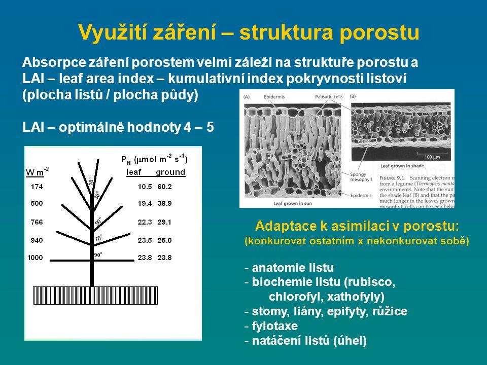 Využití záření – struktura porostu