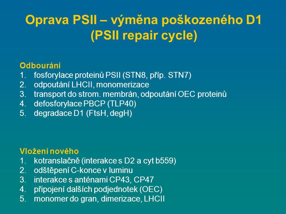 Oprava PSII – výměna poškozeného D1