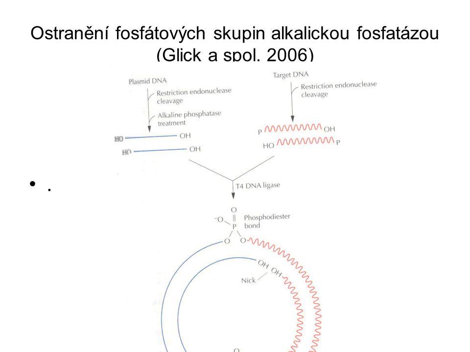 Ostranění fosfátových skupin alkalickou fosfatázou (Glick a spol. 2006)