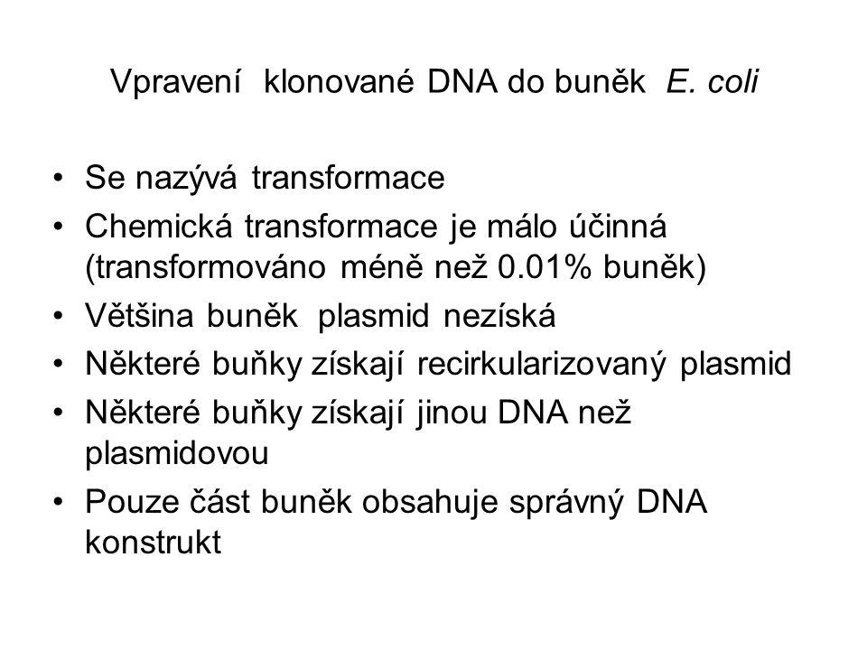 Vpravení klonované DNA do buněk E. coli