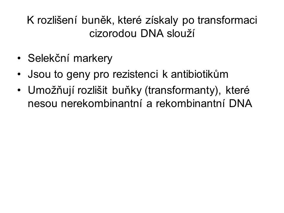 K rozlišení buněk, které získaly po transformaci cizorodou DNA slouží