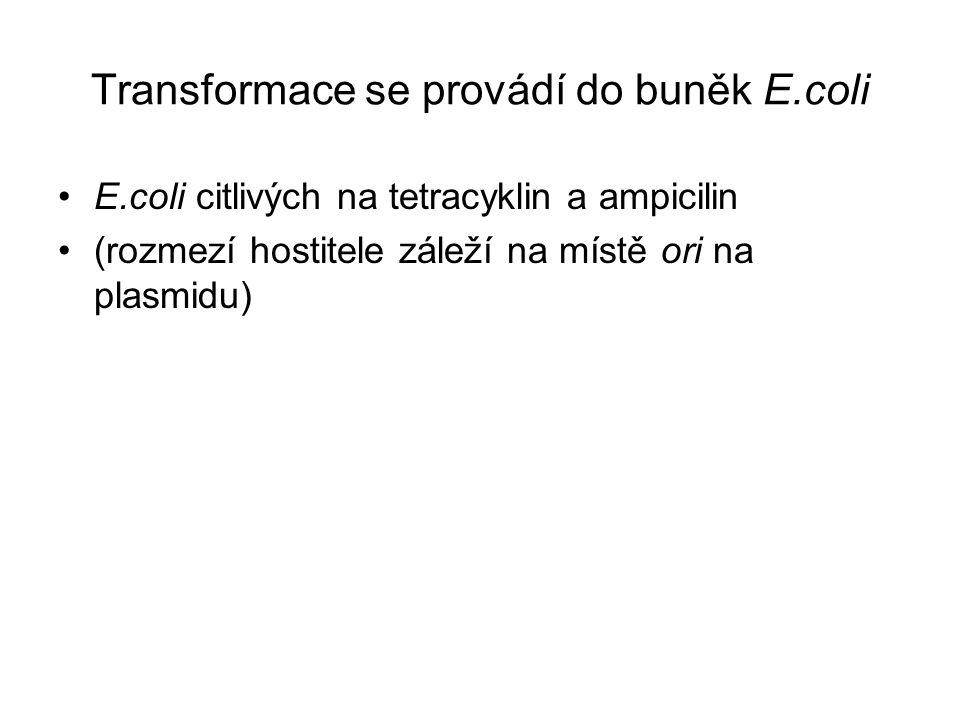 Transformace se provádí do buněk E.coli
