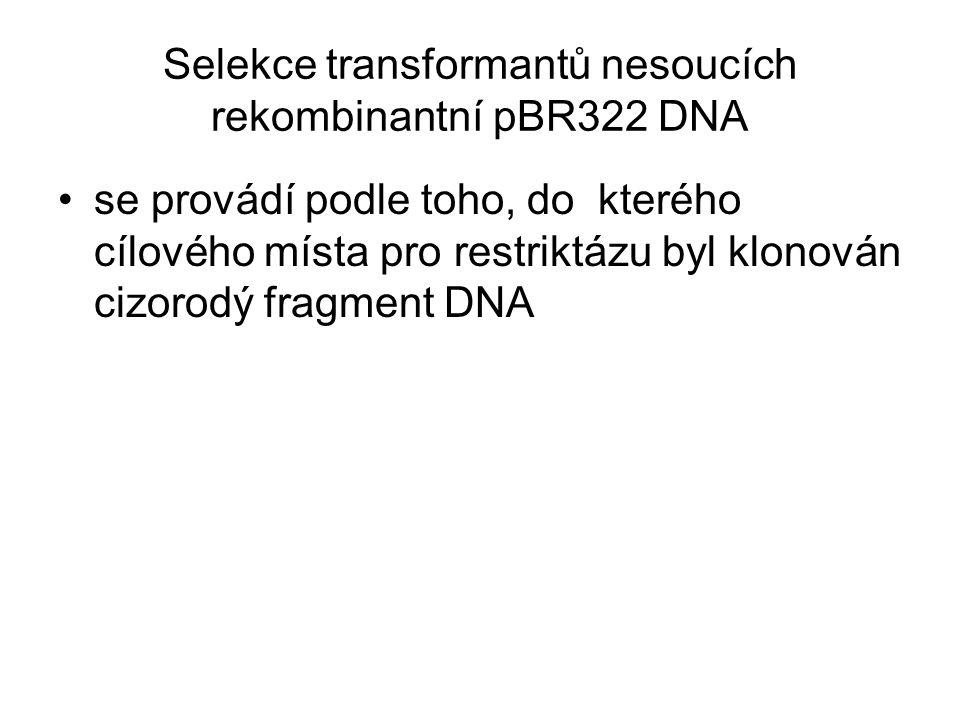 Selekce transformantů nesoucích rekombinantní pBR322 DNA