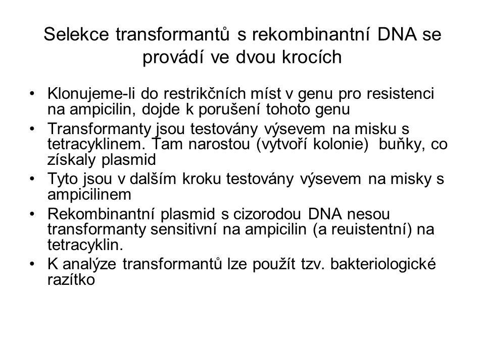 Selekce transformantů s rekombinantní DNA se provádí ve dvou krocích