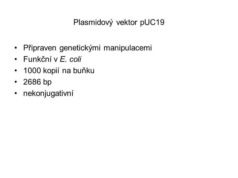 Plasmidový vektor pUC19 Připraven genetickými manipulacemi. Funkční v E. coli. 1000 kopií na buňku.