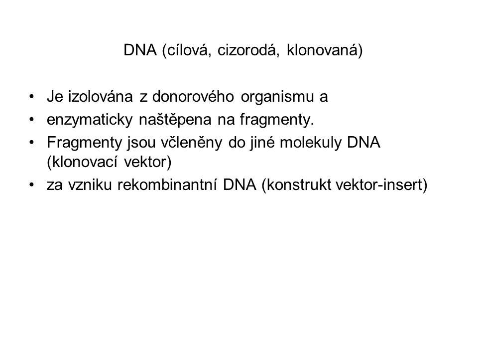 DNA (cílová, cizorodá, klonovaná)