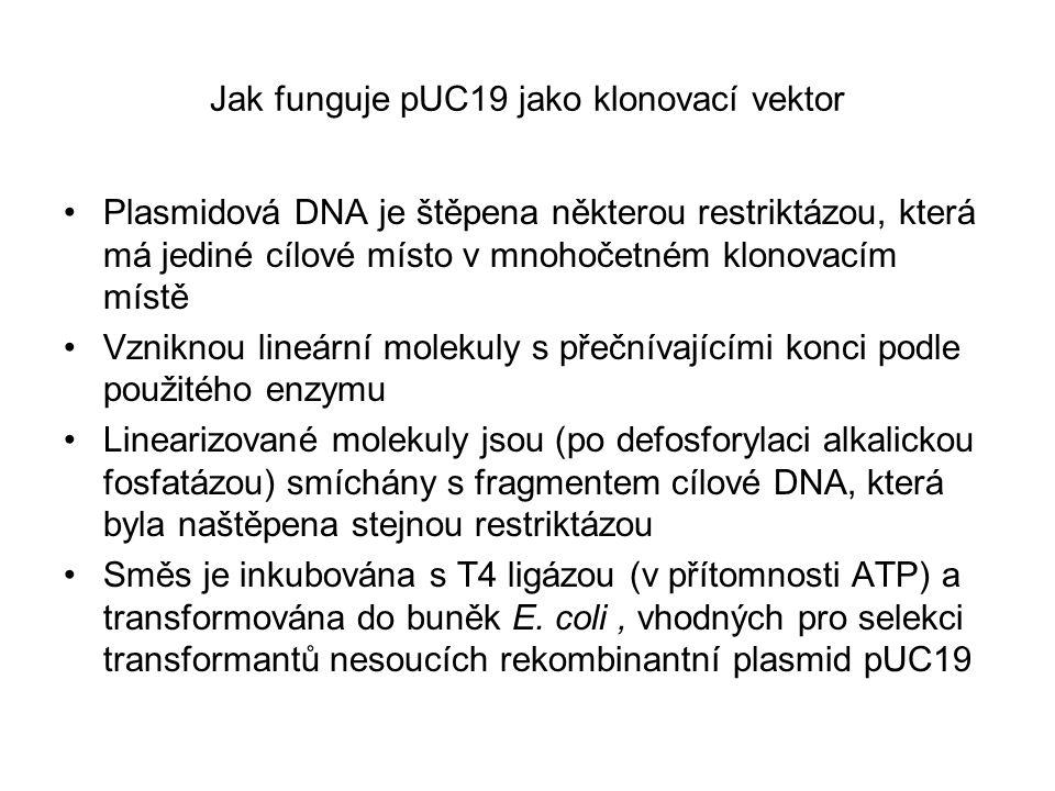 Jak funguje pUC19 jako klonovací vektor