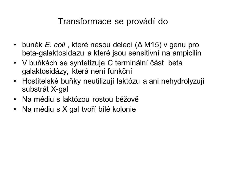 Transformace se provádí do