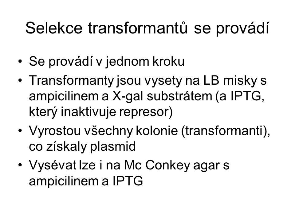 Selekce transformantů se provádí