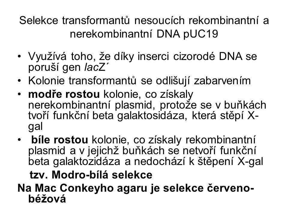 Selekce transformantů nesoucích rekombinantní a nerekombinantní DNA pUC19