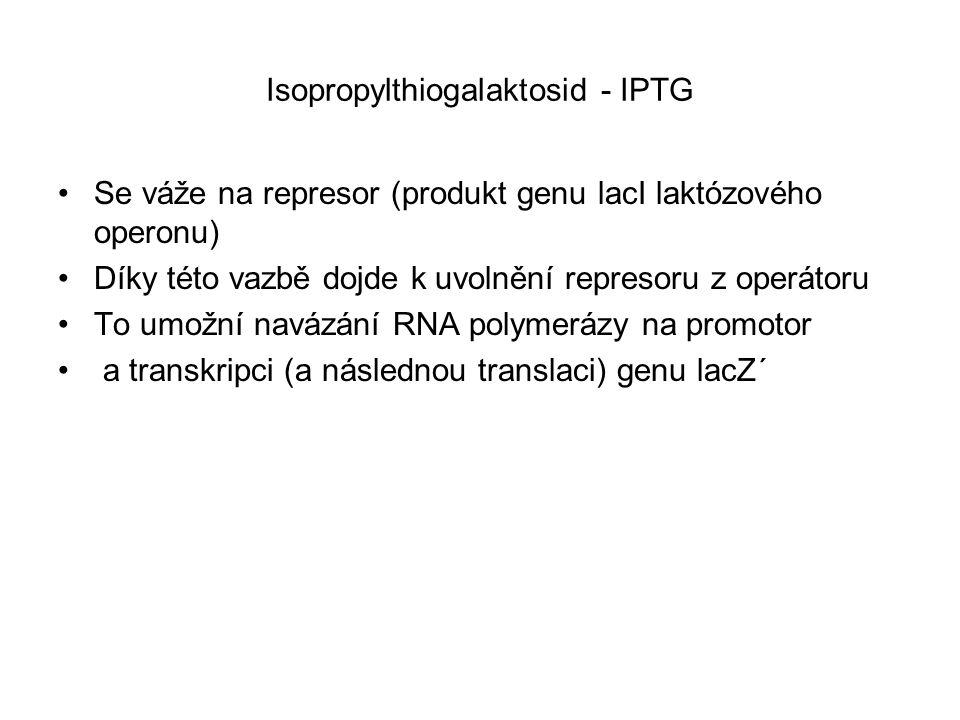 Isopropylthiogalaktosid - IPTG