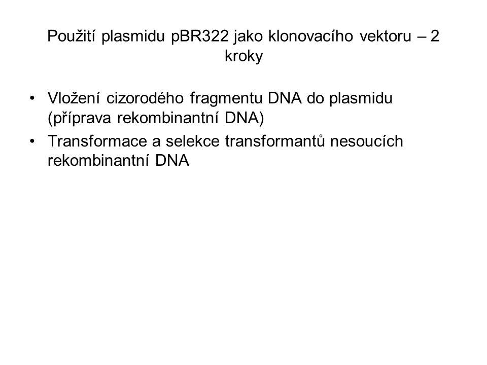 Použití plasmidu pBR322 jako klonovacího vektoru – 2 kroky