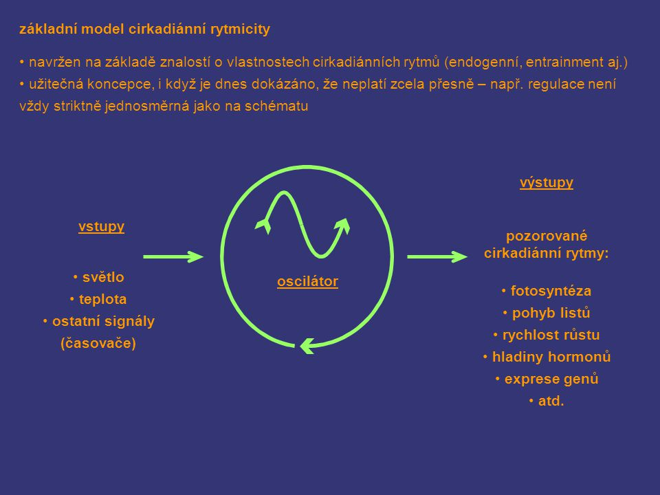 základní model cirkadiánní rytmicity