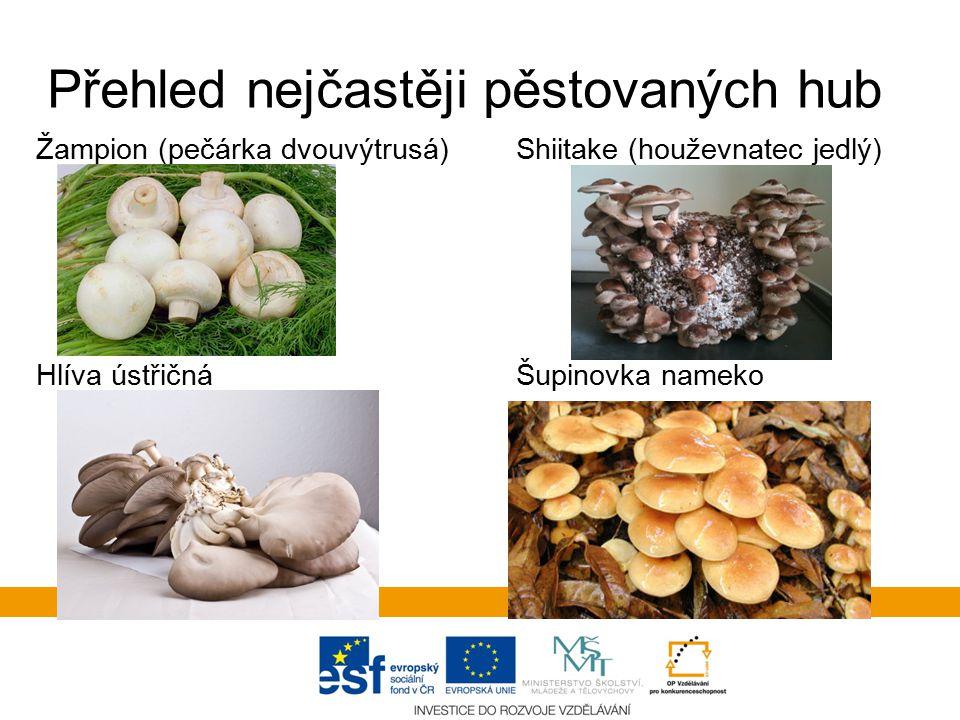 Přehled nejčastěji pěstovaných hub