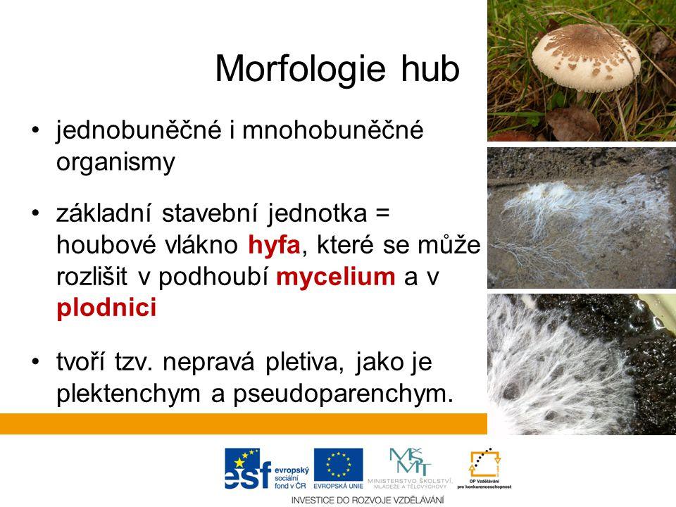 Morfologie hub jednobuněčné i mnohobuněčné organismy