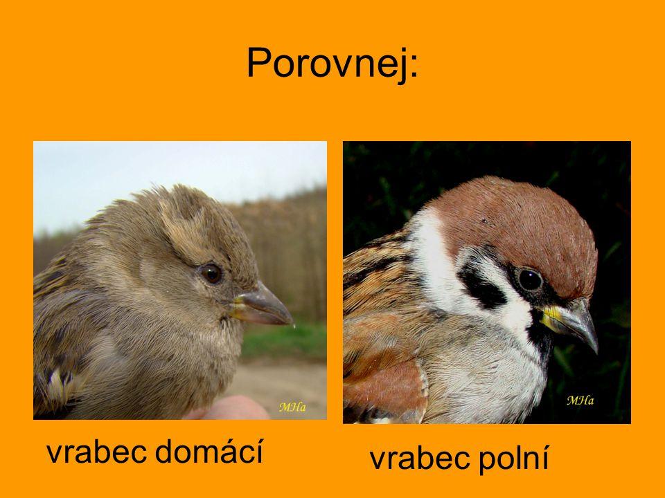 Porovnej: vrabec domácí vrabec polní