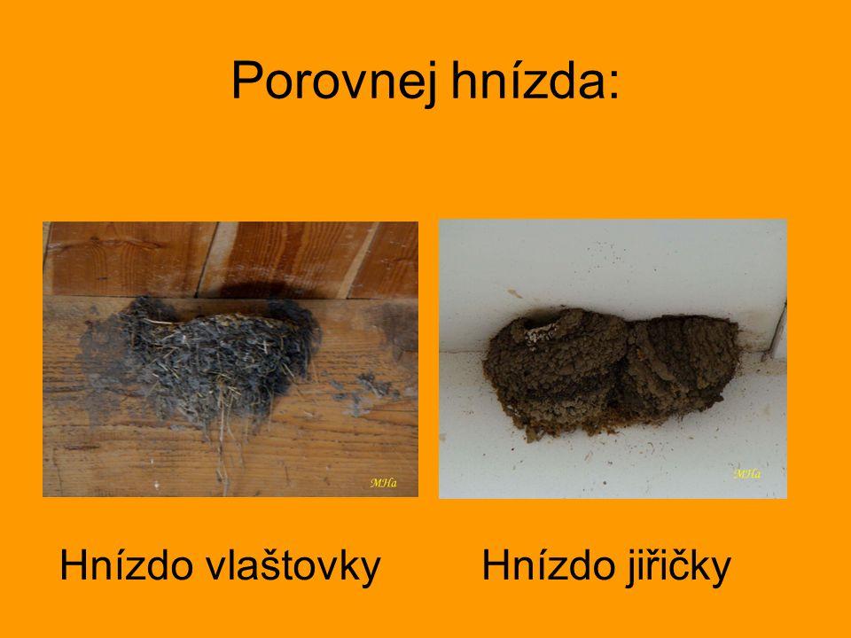 Porovnej hnízda: Hnízdo vlaštovky Hnízdo jiřičky