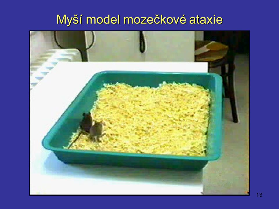 Myší model mozečkové ataxie