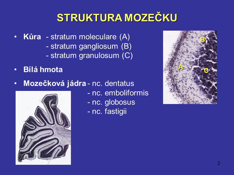 STRUKTURA MOZEČKU Kůra - stratum moleculare (A)