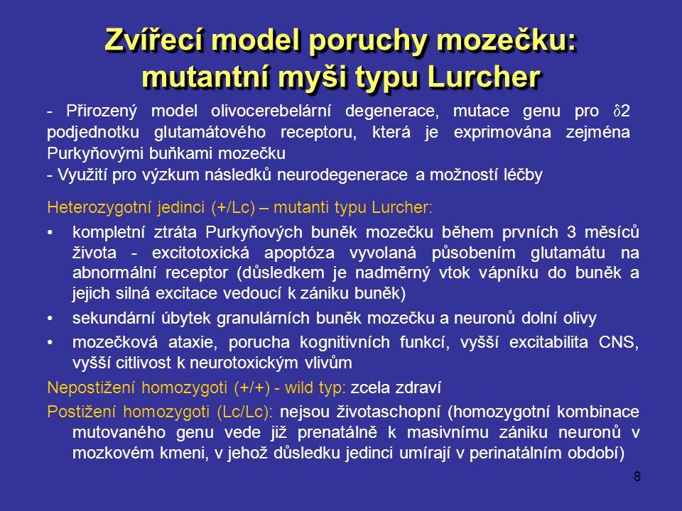 Zvířecí model poruchy mozečku: mutantní myši typu Lurcher