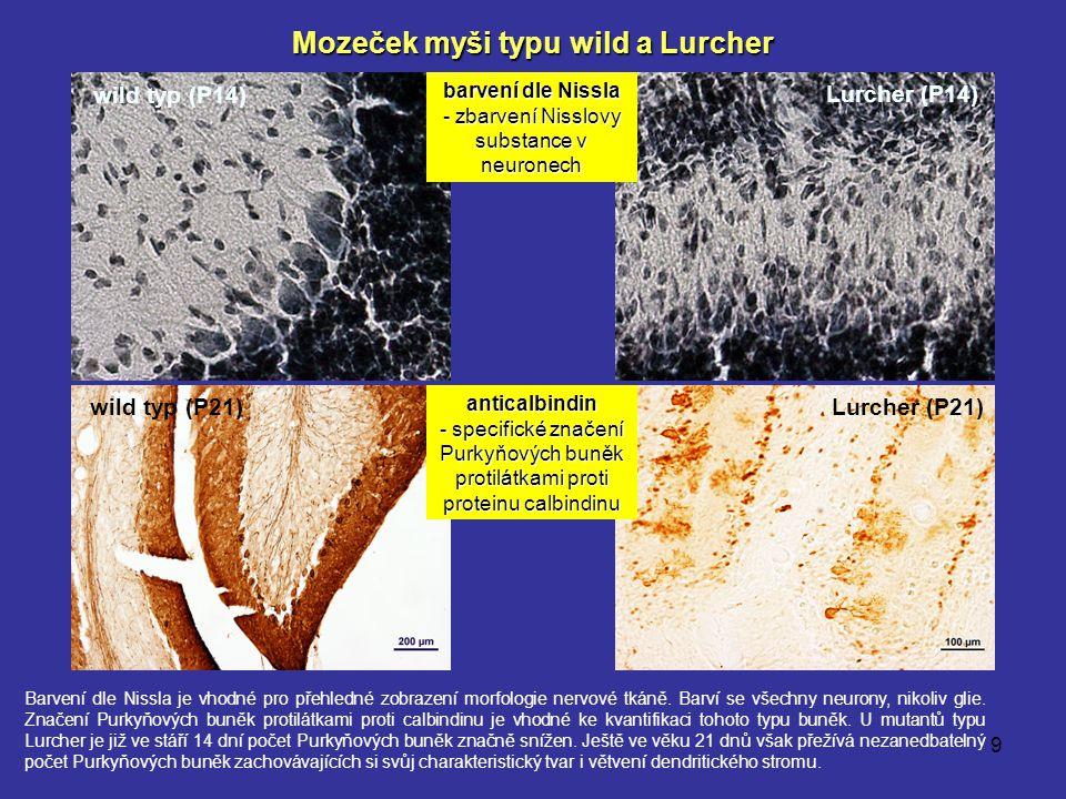 Mozeček myši typu wild a Lurcher