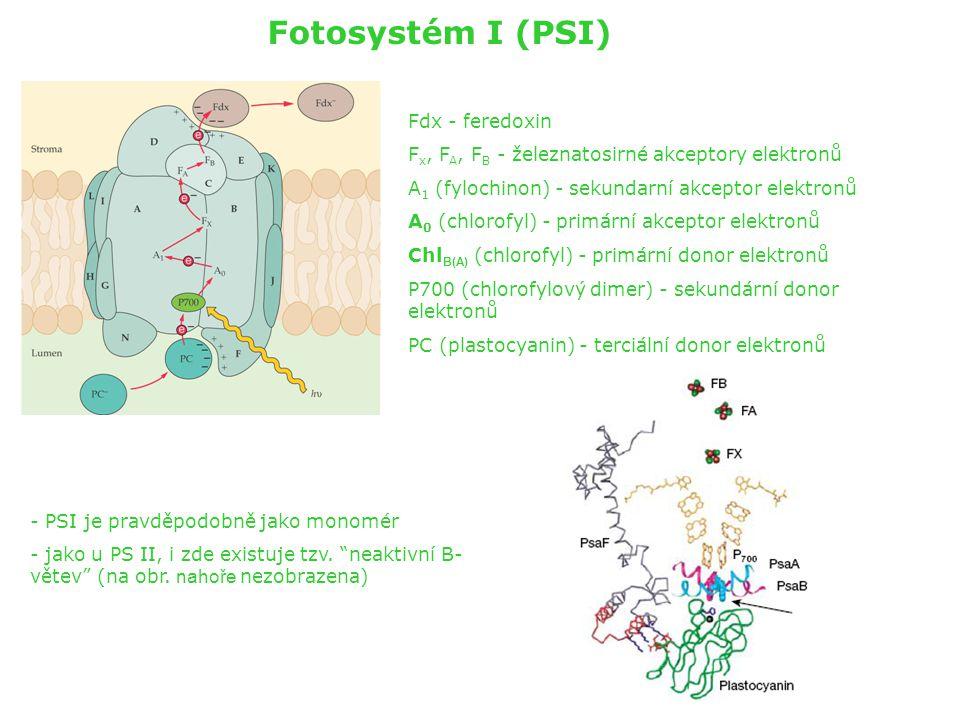 Fotosystém I (PSI) Fdx - feredoxin