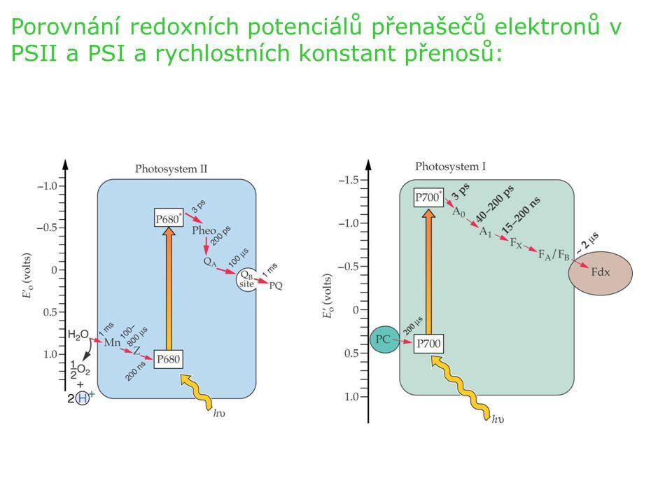 Porovnání redoxních potenciálů přenašečů elektronů v PSII a PSI a rychlostních konstant přenosů: