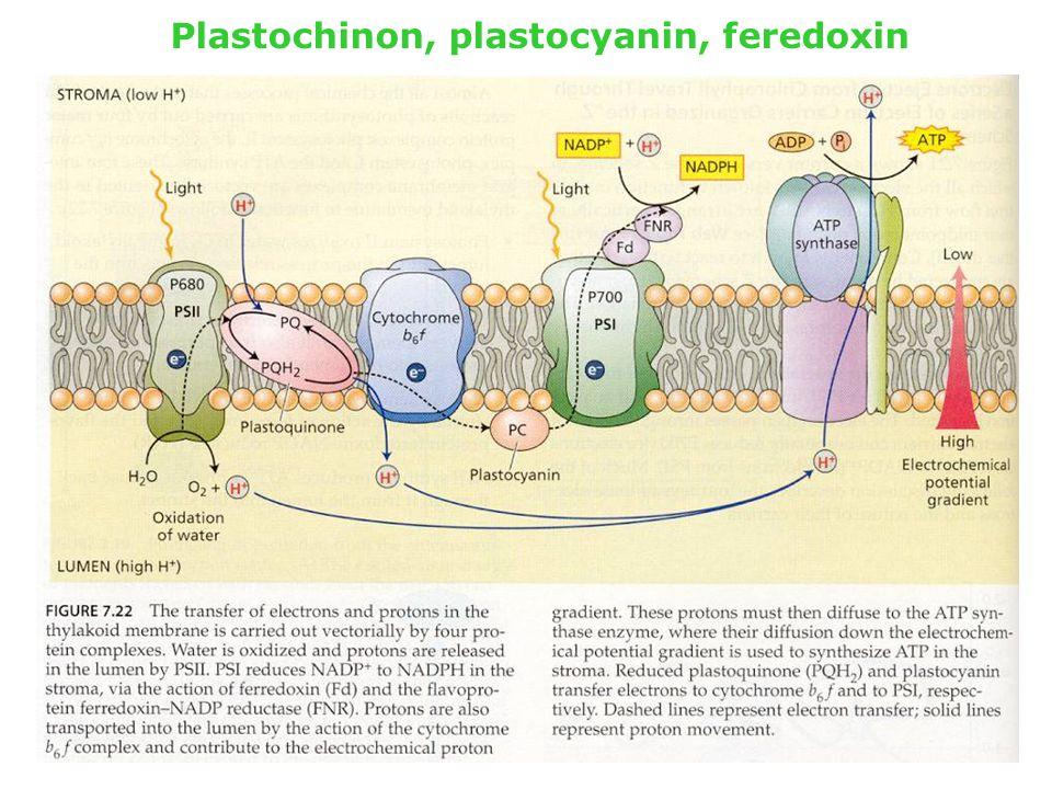 Plastochinon, plastocyanin, feredoxin
