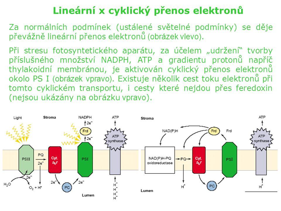 Lineární x cyklický přenos elektronů