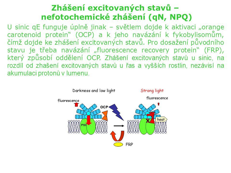Zhášení excitovaných stavů – nefotochemické zhášení (qN, NPQ)